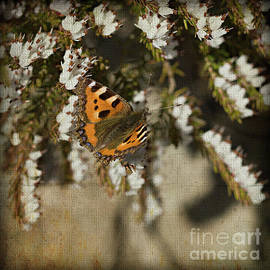 White Heather And Butterfly by Liz Alderdice