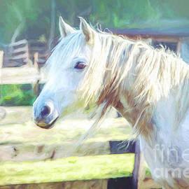 White Horse by Eleanor Abramson