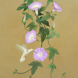 White Hummingbird and Morning Glory Vine by Spadecaller
