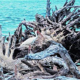 White Ibis in Cayo Costa by Mary Ann Artz
