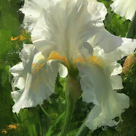 White Iris at Wauwatosa by Garth Glazier