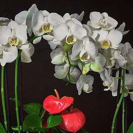 White Phalaenopsis Orchids And Anthurium Croped by TL Mair