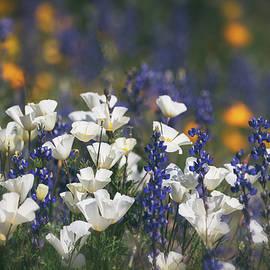 White Poppies Amongst The Lupine  by Saija Lehtonen