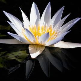 White Reflection - Gibbs Gardens by Mary Ann Artz