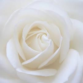 White Rose Macro by Johanna Hurmerinta