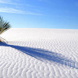 White Sand And Shadow by Douglas Taylor