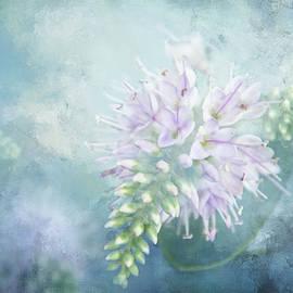White Sparkle Flower by Terry Davis