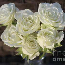 White Spray Roses by Stephanie Hanson
