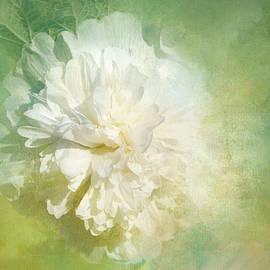 White, Textured Hollyhock by Terry Davis