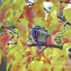 White-throated Sparrow Surrounded by Autumn  by Kerri Farley