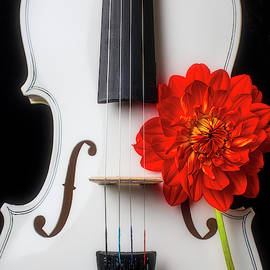 White Violin And Red Dahlia by Garry Gay