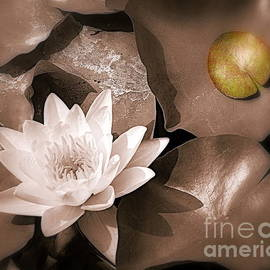 White Water Lily by Tru Waters