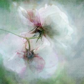 White Wild Roses by Terry Davis