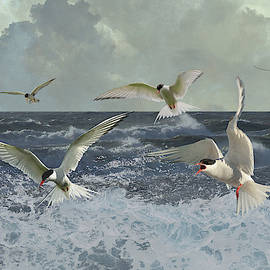Whitecaps and Terns by Spadecaller