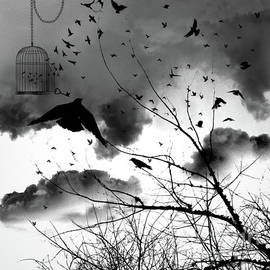 Who Let The Birds Out by Janice Pariza
