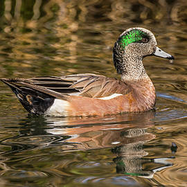Wigeon and Abstract Reflections by Marv Vandehey