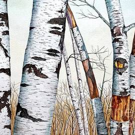 Wild Birch Trees in the Forest in watercolor by Christopher Shellhammer