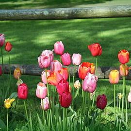 Wild Colorful Roadside Tulips by Dora Sofia Caputo Photographic Design and Fine Art