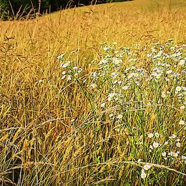Wild Daisy In Grain Field by Bellesouth Studio
