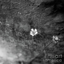 Wild Flower by Neha Gupta