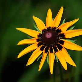 Wild Flower Portrait by Marilyn De Block