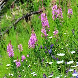 Wild Flowers Put On A Show by Joan Stratton