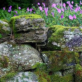 Wild Gereniums And Stone Wall by Alida M Haslett