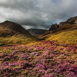 Wild Highlands Heather by Debra and Dave Vanderlaan
