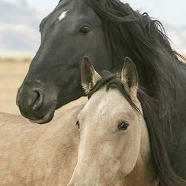 Wild Horse Bonds by Kent Keller