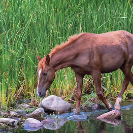 Wild Horse Salt River by Dave Dilli