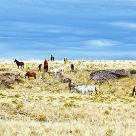 wild horses adults colts prairie ridge Oregon by Robert C Paulson Jr