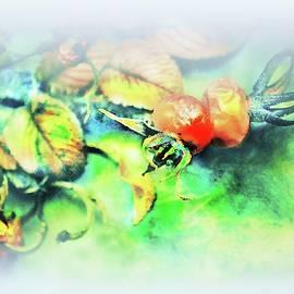 Wild Roses #6 by Slawek Aniol