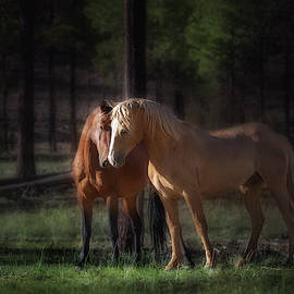 Wild Stallions In the Forest by Liz Uribe