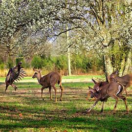 Wild Turkey Startles Deer by Laura Vilandre
