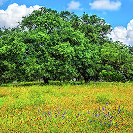 Wildflower And Oak Dream In The Hill Country by Lynn Bauer