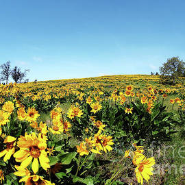 Wildflower Season by Sylvia Cook