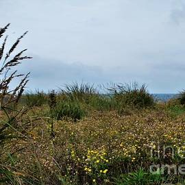 Wildflowers By The Sea by Richard Thomas
