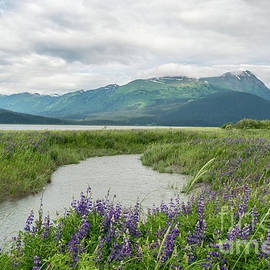Wildflowers in Alaska by Paul Quinn