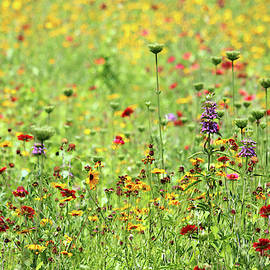 Wildflowers In The Spring by Cynthia Guinn