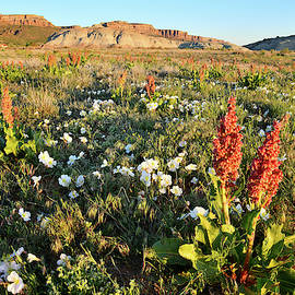 Wildflowers Near Ruby Mountain In Grand Junction Co by Ray Mathis
