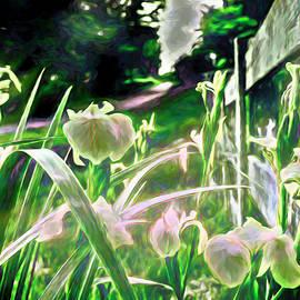 Willie Nelson's Irises  by Jim Love