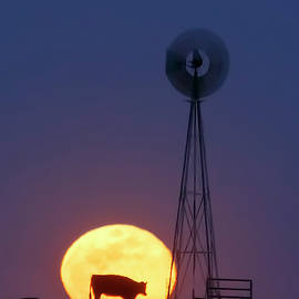 Windmill And Moon 01 by Rob Graham