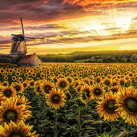 Windmill in the Sunflower Fields in HDR Detail by Debra and Dave Vanderlaan