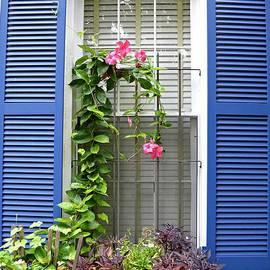 Window Climber by Linda Covino