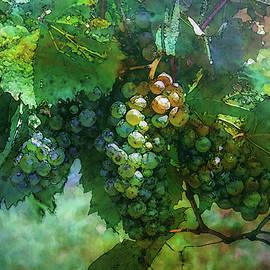 Wine Grapes 2728 Idp_2 by Steven Ward
