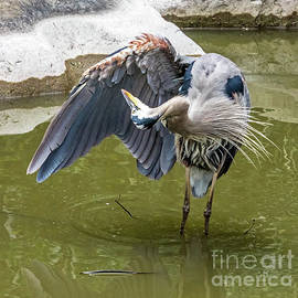 Wing Cleaning by Kate Brown
