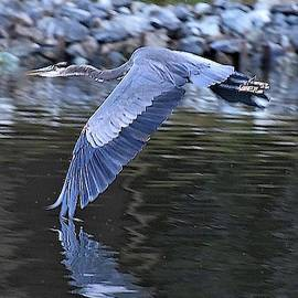 Wing Touching Water by Kim Bemis