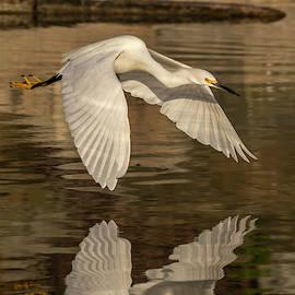 Winging It by Bruce Frye
