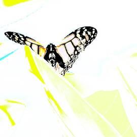 Wings Across the Sun by Alida M Haslett