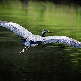 Wingspan by Mary Ann Artz
